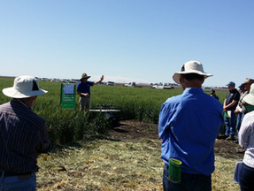 Help us inform  priorities for research in wheat, sorghum and maize
