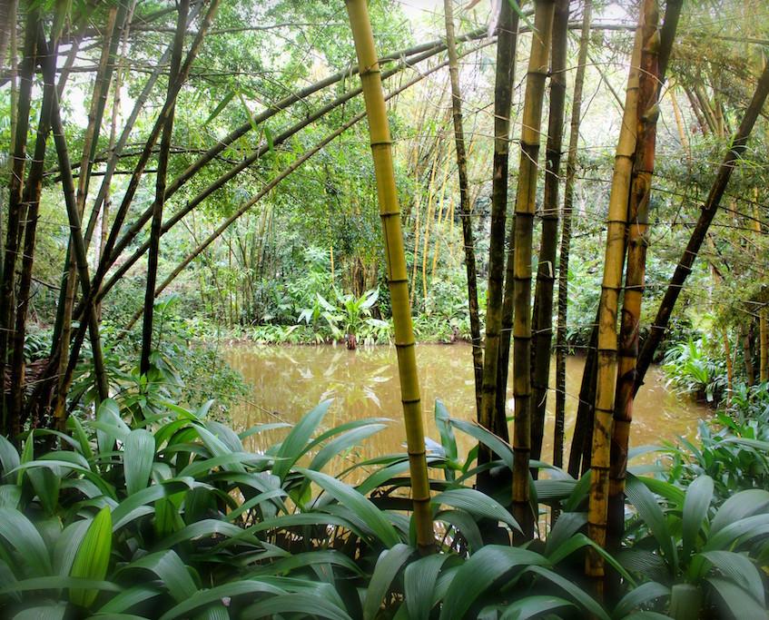 The Wallawwa - Negombo