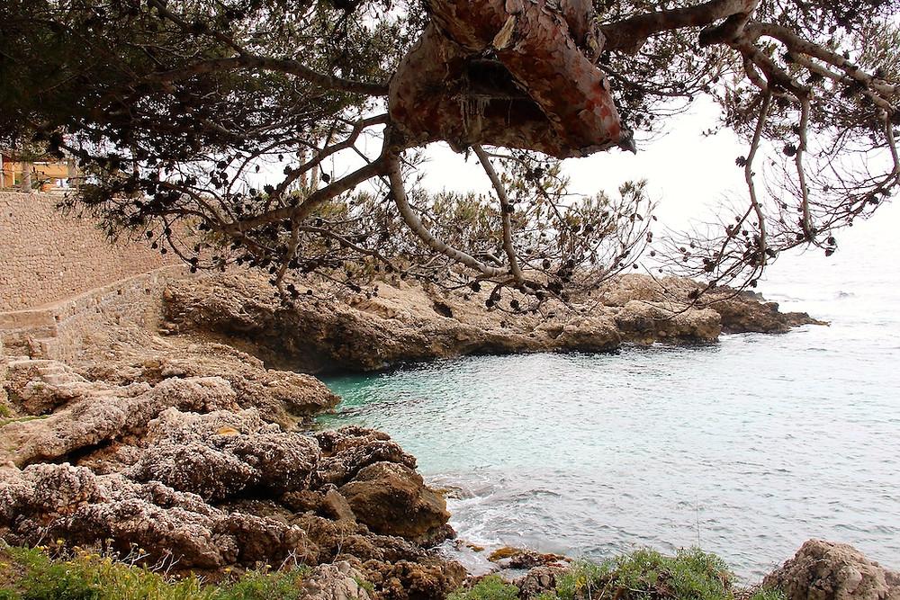 Sentier du littoral à Cap d'ail