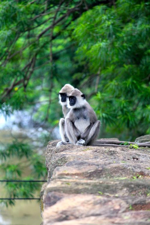 Les singes ont envahis le rocher
