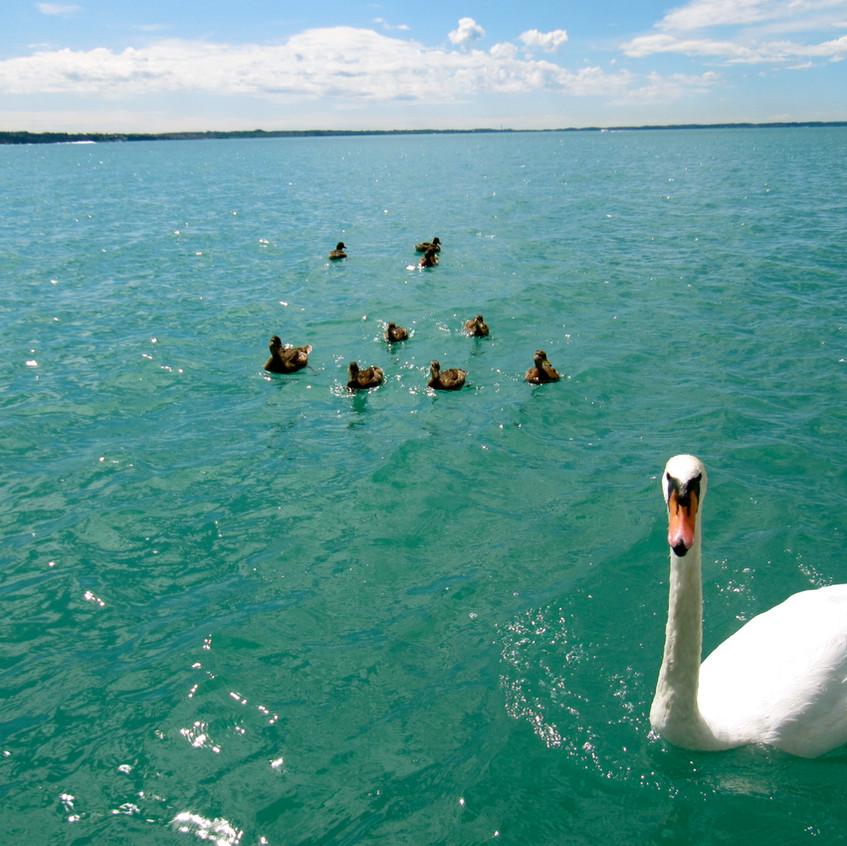 Tour en bateau Lac de Garde