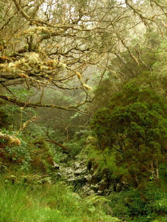 Descente du Mont Maïdo