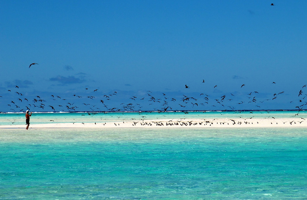 L'île aux oiseaux à Tetiaora
