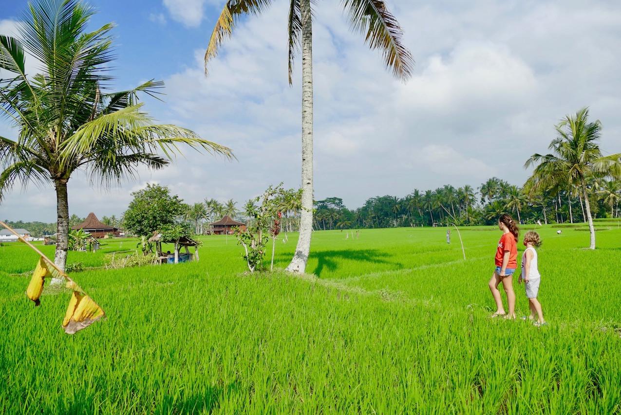 Balade en vélo dans les rizières