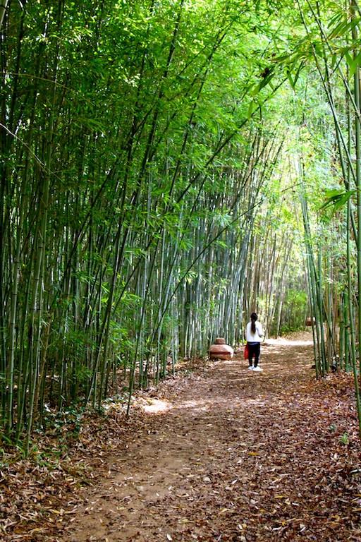 Forêt de bambous à Montauroux
