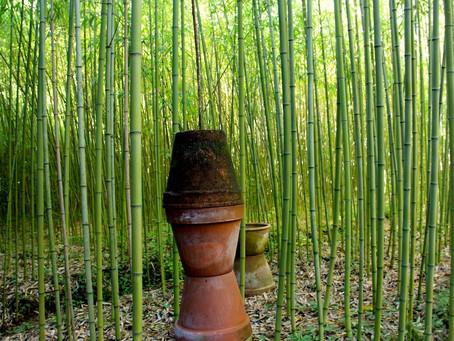 Une forêt de bambous au coeur de la Provence