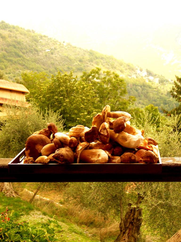 La récolte des cèpes au col de Turin
