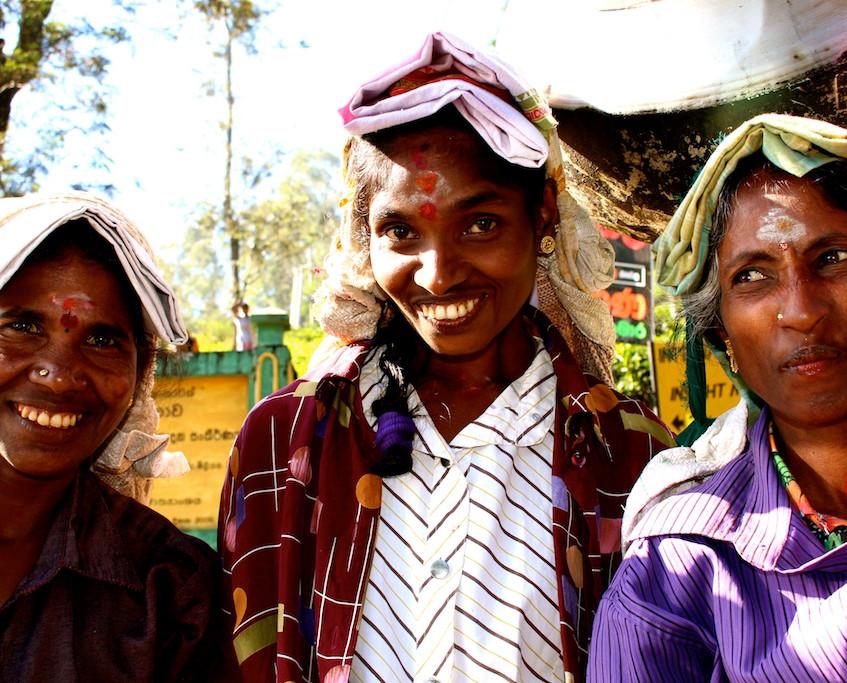 Sri lankaise dans les champs de thés