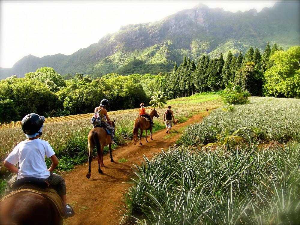 Les champs d'ananas à cheval à Moorea