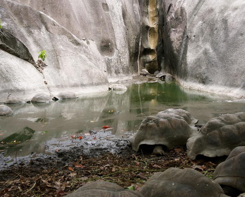 Les tortues à Anse source d'argent