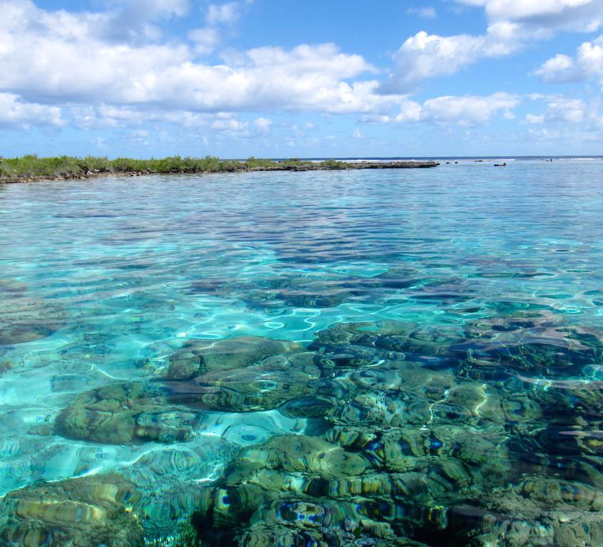 Le jardin de corail à Bora