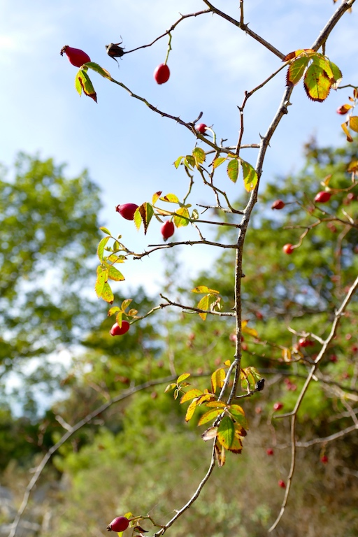 La nature au Baou