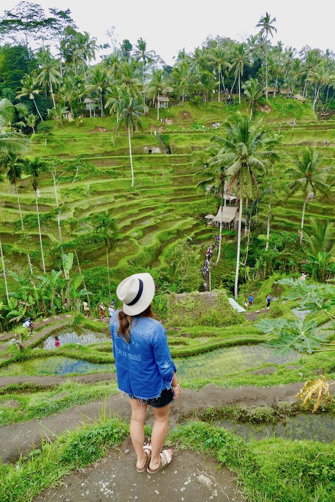 rizières de Tegallalang