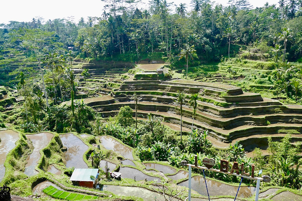 Les rizieres d'Ubud