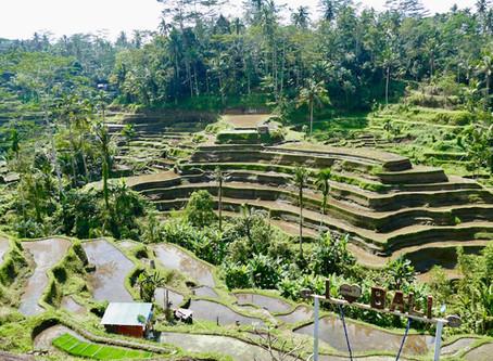 La fin du séjour à Ubud...le paradis des rizières !