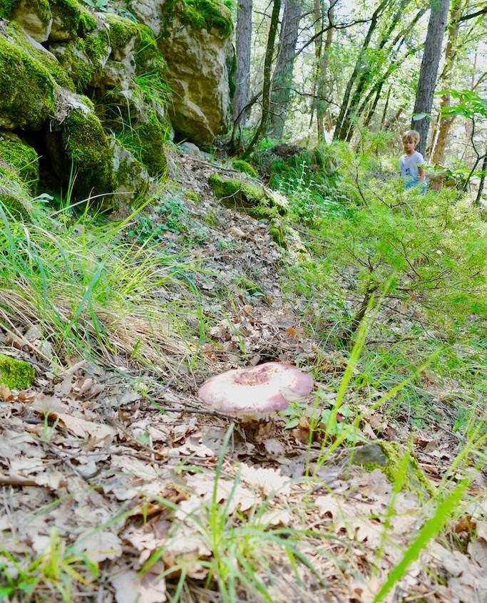 la forêt de châtaigniers de Pelasque