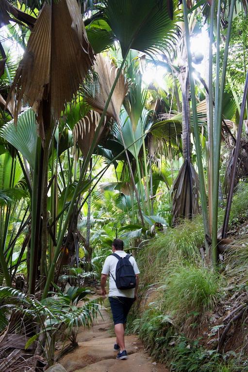 Forêt de Maï