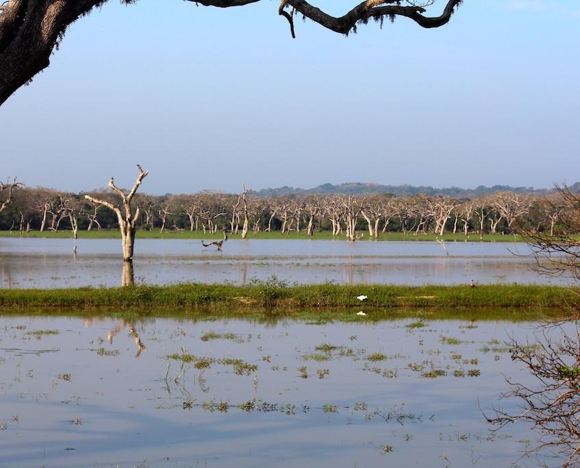 Safari au parc de Yala