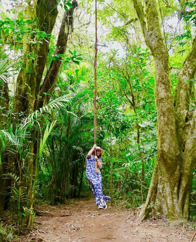 la forêt primaire à Munduk