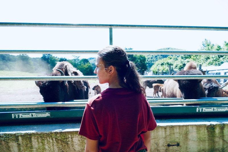 Les bisons de Kanatha-Aki