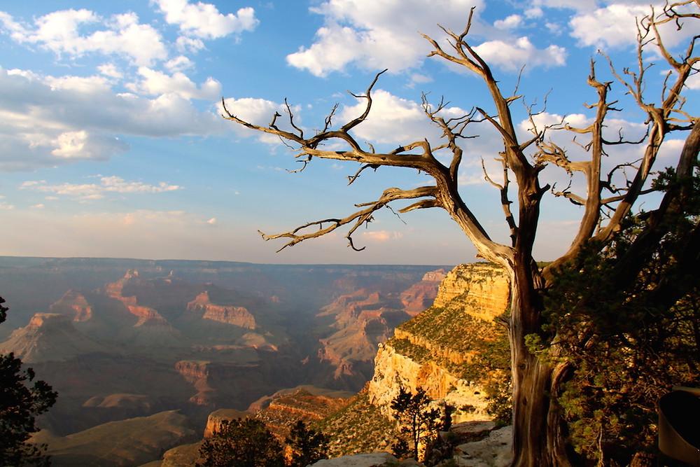 Le Grand Canyon en face de l'hôtel El Tovar