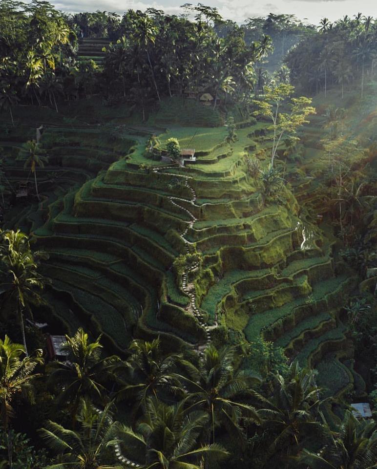les rizières d'Ubud