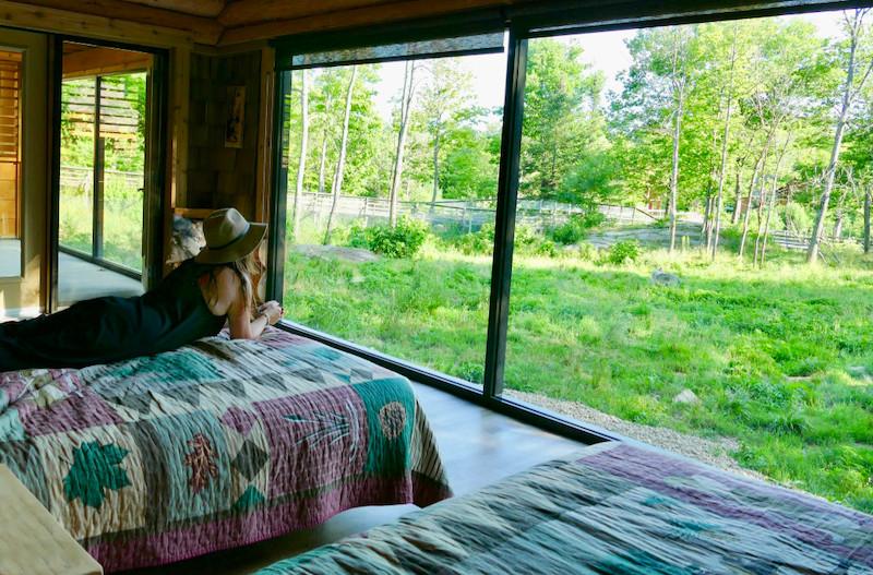 Vue depuis notre lit sur la meute de loups