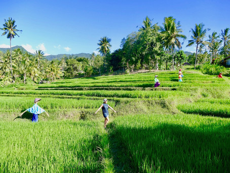Conseils pour voyager à Bali en dehors des sentiers battus : Comment préparer votre voyage ?