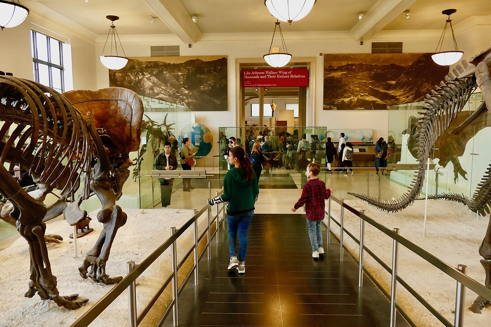 LE MUSEE D'HISTOIRE NATURELLE de New York