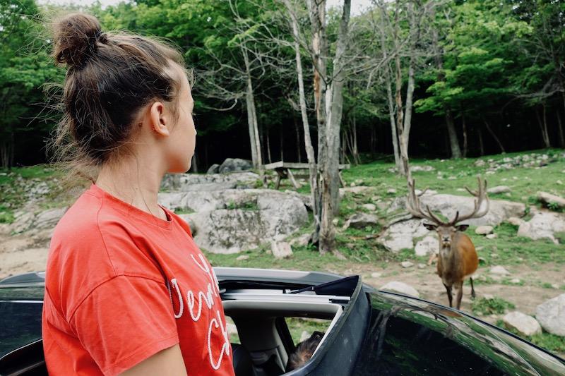 Observation des cerfs