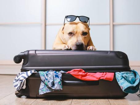 Partir en vacances avec son animal de compagnie