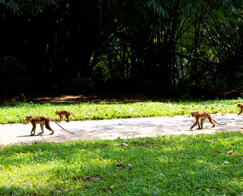 Le jardin botanique de Kandy