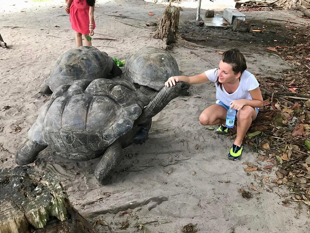 Les tortues de Curieuse