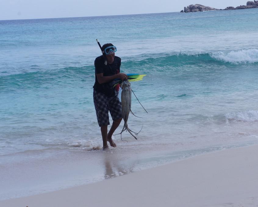 Pêcheur de poulpe, grande anse