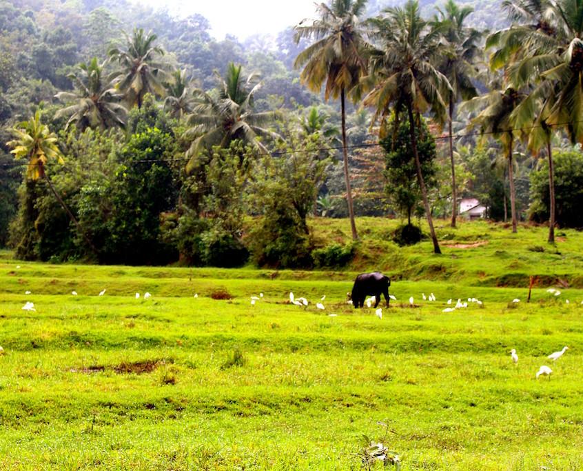 Sur la route de Nuwara