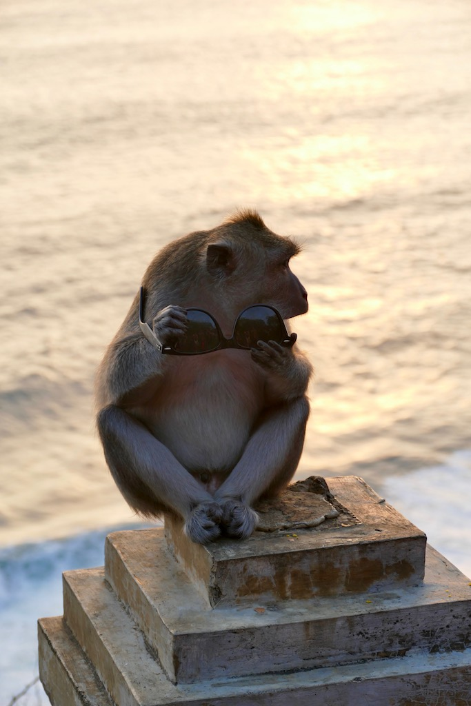Le singe chapardeur