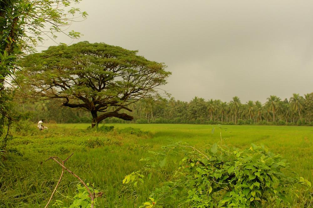 La campagne sri lankaise