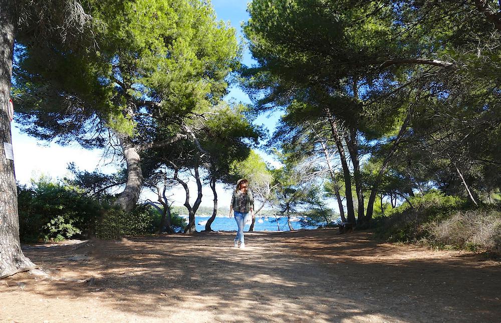 Balade sous les pins sur l'île de Saint-Honorat