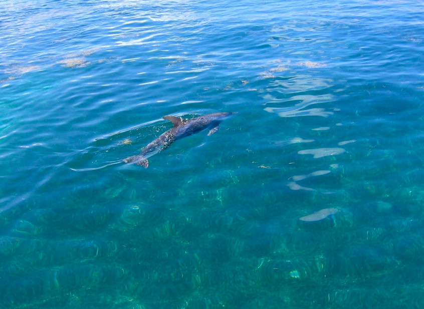 Les dauphins d'Isla Mujeres