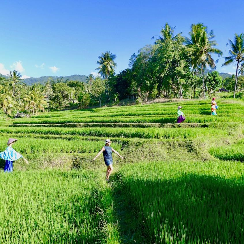 Les rizièresd'Aling-Aling