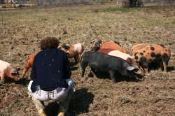 Driss et les cochons