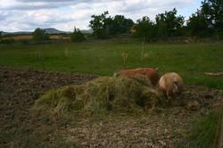 de l'herbe fraîche