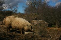 Marie, la laineuse