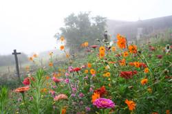 bande de fleurs