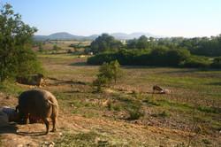 les parcours des cochons