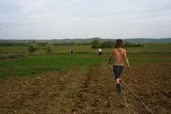 plantation des topinambour
