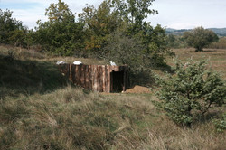 cabane au cochon en bois