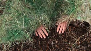 Under the Grass Blanket