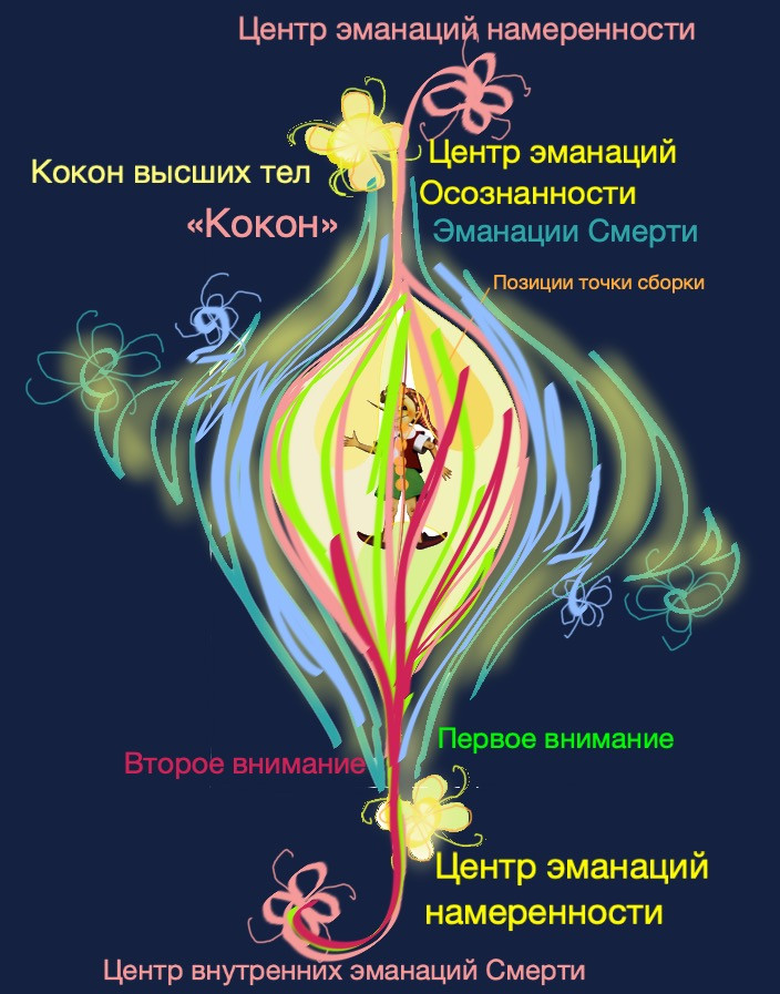 """Кокон"", перегородка в объемном коконе человека №4"