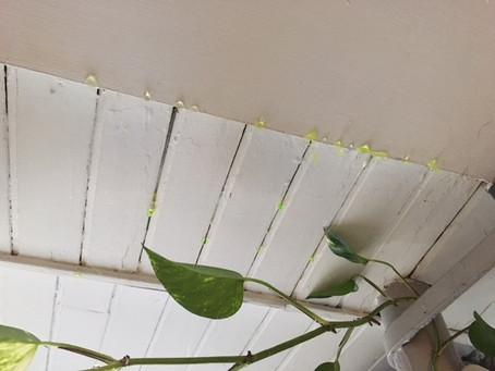 RECHERCHE DE FUITE NON DESTRUCTIVE - Infiltrations d'eau sur un toit terrasse - Colorant traceur